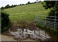 SN3807 : Muddy entrance to a hillside field near Penallt Farm west of Kidwelly by Jaggery
