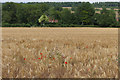 TQ0548 : View towards the North Downs by Alan Hunt