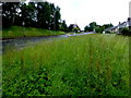 H4772 : Long grass, Donaghanie Road, Campsie, Omagh by Kenneth  Allen