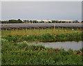 TL5172 : Sheep and solar farm by Hugh Venables
