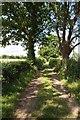 SO6860 : Bridleway near Thorn Farm by Philip Halling