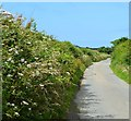 SS2315 : Country lane, Brownspit, Cornwall by Oswald Bertram