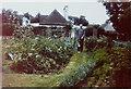 TR0824 : Vegetable garden, The Lodge, St Andrew's Road, 1979 by John Baker