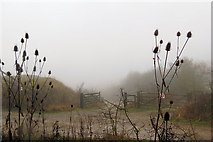 SP9314 : The Track to the Octagon Hide, College Lake, on a foggy day by Chris Reynolds