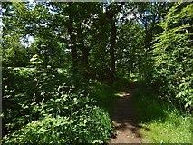 NS5372 : Path through Roman Park by Lairich Rig