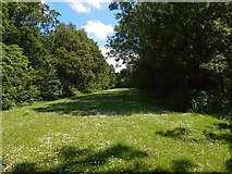 NS5372 : Roman Park: view along the Antonine Wall by Lairich Rig