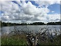 SJ4034 : Ellesmere: The Mere from Cremorne Gardens by Jonathan Hutchins