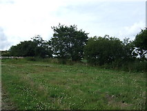 NZ7714 : Hedgerow near America House Farm by JThomas