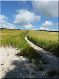 SU9414 : South Downs Way at Littleton by Richard Law