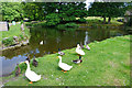 SK1752 : Duck pond at Tissington by Bill Boaden