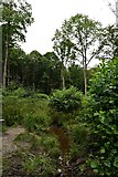 TQ6895 : Norsey Wood stream by John Myers