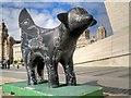 SJ3390 : Black Superlambanana by David Dixon