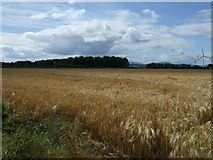 NU0038 : Crop field off the B6525 by JThomas