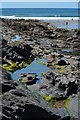 SX1496 : Rock pools at Crackington Haven, Cornwall by Edmund Shaw