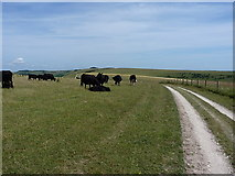 TQ2310 : Cows keeping out of the way by Richard Law