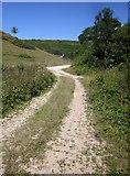 SY3192 : Track and road, Alder Grove by Derek Harper