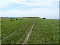 TQ2510 : On the ridge near Devils Dyke by Richard Law