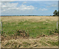 TG4420 : Marsh pasture on Heigham Holmes by Evelyn Simak