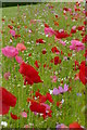 SE2854 : Pictorial meadow at RHS Garden Harlow Carr  by Graham Hogg