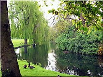 TF0920 : A secluded spot in the Wellhead Gardens at Bourne, Lincolnshire by Rex Needle