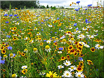 TQ6249 : Meadow at Broadview Gardens by Oast House Archive