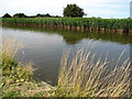 TG4319 : Reedbeds beside Candle Dyke by Evelyn Simak
