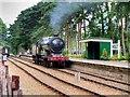 TG0939 : Holt Railway Station by David Dixon