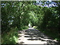 NZ0173 : National Cycle Route 10 by JThomas