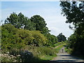 TL0993 : Greenhill Road, Elton by Richard Humphrey
