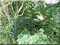SJ7286 : Footbridge over Agden Brook by Dave Dunford