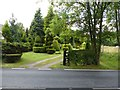 SJ7086 : Topiary on Burford Lane by Dave Dunford