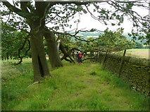 SE0322 : Fallen tree on Sowerby Bridge FP141, Link E by Humphrey Bolton