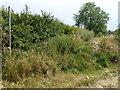 TL0595 : Blocked byway between Nassington and Woodnewton by Richard Humphrey