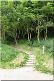 TA1281 : Footpath in Horn Dale, Filey Country Park by David Smith