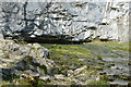 SD8964 : Malham Beck emerging from a cave by N Chadwick