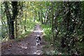 SK6989 : Walking the dog in Pusto Hill Wood by Graham Hogg