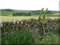 SD8466 : Ladder stile on a footpath, Langcliffe by Humphrey Bolton
