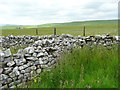 SD8468 : Wall junction between Fountains Fell and Rough Lands, Malham Moor by Humphrey Bolton