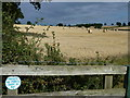 TL0786 : Harvest time near Polebrook, Northamptonshire by Richard Humphrey