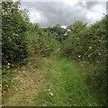 SS6141 : Churchpath Lane by Hugh Craddock
