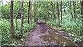 SK0642 : Churnet Valley trail by Chris Morgan
