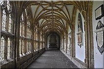 ST5545 : Wells : Cathedral Church of St Andrew by Lewis Clarke