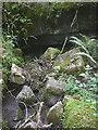 SD4487 : Wakebarrow Pot entrance, Whitbarrow by Karl and Ali