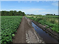TL5270 : Edge of a potato field by Hugh Venables