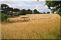 SX9795 : East Devon : Grassy Field by Lewis Clarke