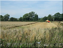 TL0536 : Harvest time near Brookside Farm by JThomas