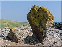 NH7662 : Bedrock below Eathie Hill on the shore of the Black Isle by Julian Paren