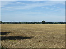 TL1643 : Flat farmland near Kingshill Farm by JThomas