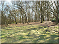 SP1096 : Hill Hurst in early April, Sutton Park by Robin Stott