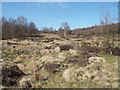 SP1096 : Colours of late winter – heathland rising to Upper Nut Hurst, Sutton Park by Robin Stott